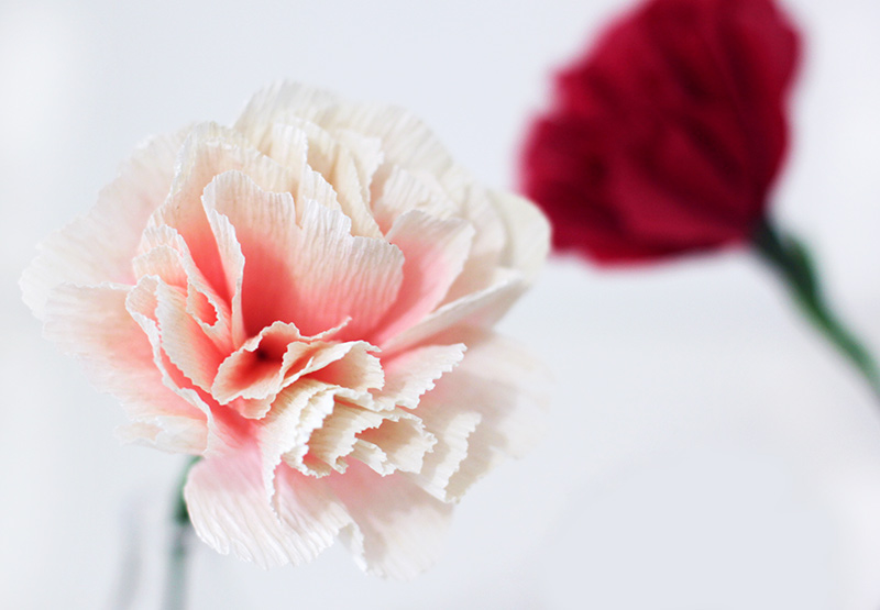 Paper Carnations